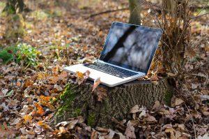 Steuerberatung Forstwirtschaft Farina